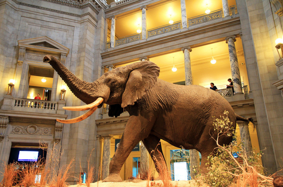 blogs_citydesk_files_2016_03_1280px_usa_national_museum_of_natural_history0